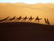 Camel shadows on sand