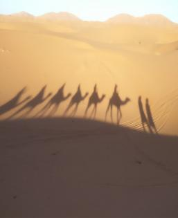 Shadows of camels on short-term immersion in the desert