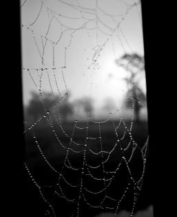 spider web grayscale photo